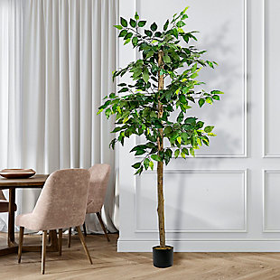 6-foot Ficus Tree in Pot, , large