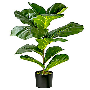 30-inch Fiddle Leaf Fig Bush in Pot, , large
