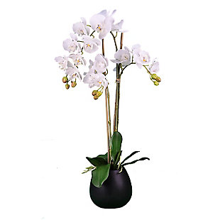 32-inch White Orchid in Black Pot, , large