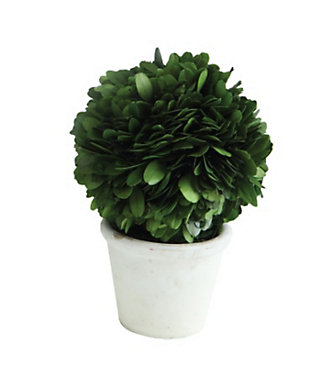 Single Ball Preserved Boxwood Topiary in Clay Pot, , large