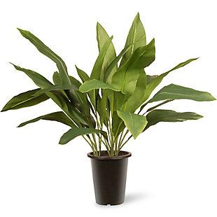 National Tree Company Garden Accents Aspidistra Plant, , large