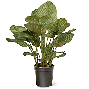 National Tree Company Garden Accents Calathea Plant, , large
