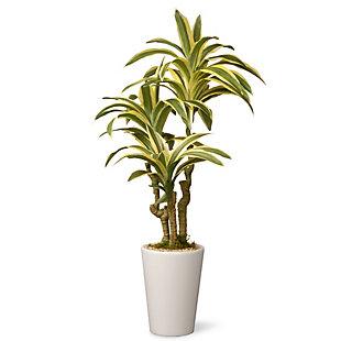 National Tree Company Garden Accents Dracaena Plant, , large