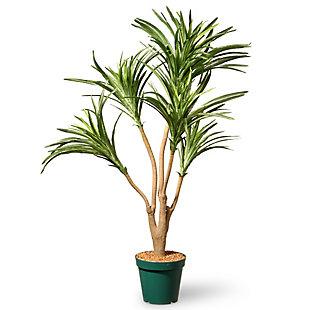 National Tree Company Ft. Potted Dracaena Plant, , large