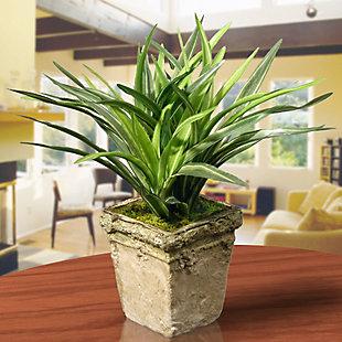 National Tree Company Dracaena Plant, , rollover