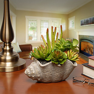 National Tree Company Succulent Plants, , rollover