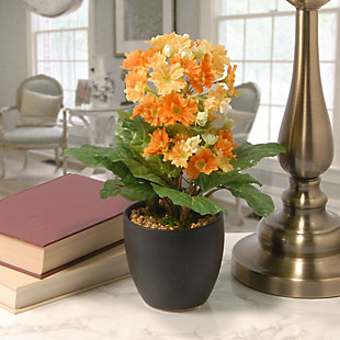 National Tree Company Potted Primula Plant, , rollover