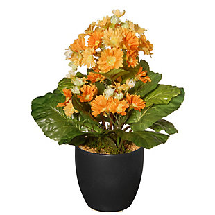 National Tree Company Potted Primula Plant, , large