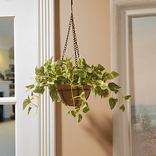 National Tree Company Pothos Plant Hanging Basket, , rollover