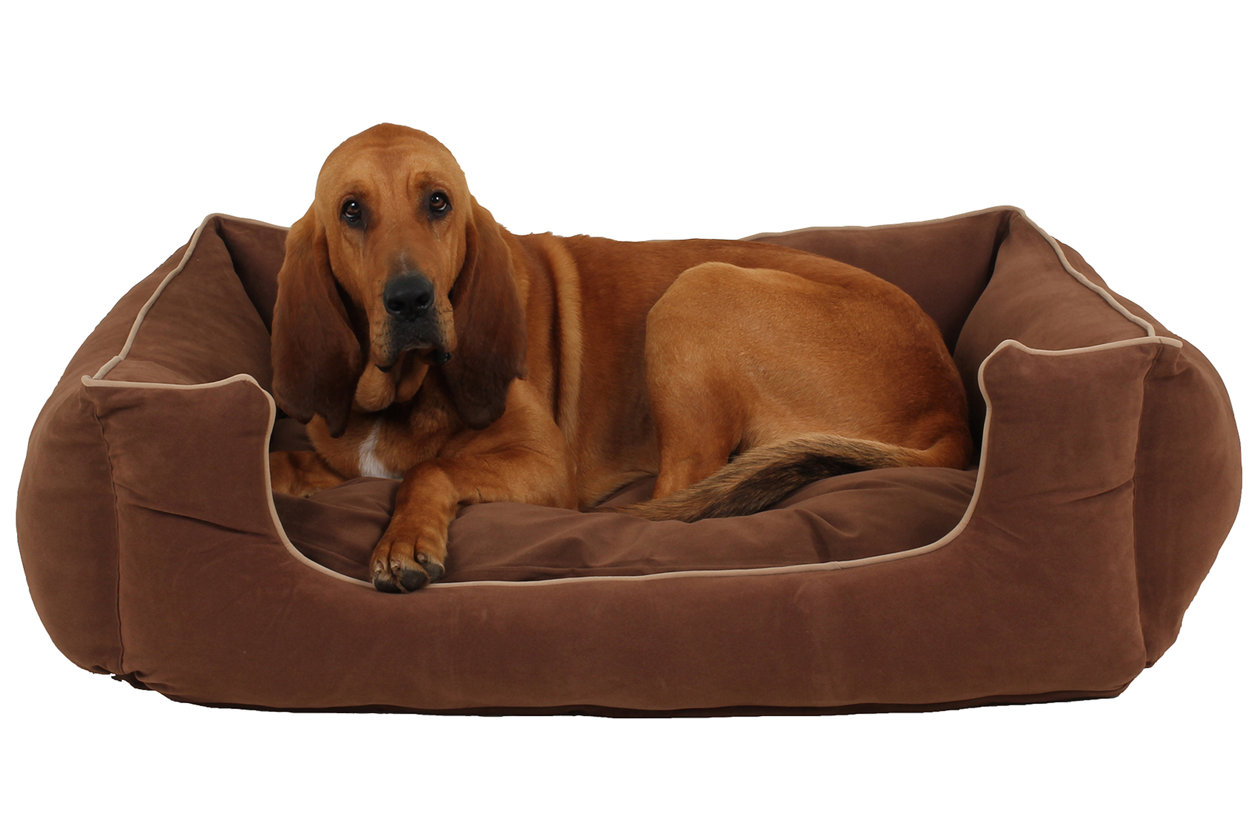great pillow brown dogs serta gallery dog sleeper of cushion bed cute blanket large pet quilted orthopedic perfect top