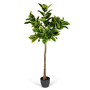 6-Foot Tall Real Touch Ultra-Realistic Varrigated Ficus Plant in Plastic Pot with Faux Dirt, , large