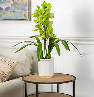 26-Inch Tall Real Touch Ultra-Realistic Green Cymbidium Orchid Arrangement in Pot, , rollover