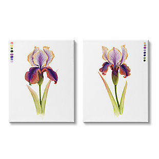 Stupell Industries  Orange Purple Iris Flower with Color Key, 24 x 30, Canvas Wall Art, Purple, large