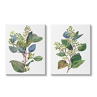 Stupell Industries  Soft Eucalyptus Plant Blue Green Ombre Leaves, 24 x 30, Canvas Wall Art, White, large