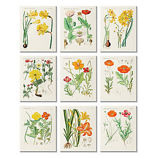 Stupell Industries  Vibrant Botanical Scientific Study Vintage Florals, 11 x 14, Canvas Wall Art, , large