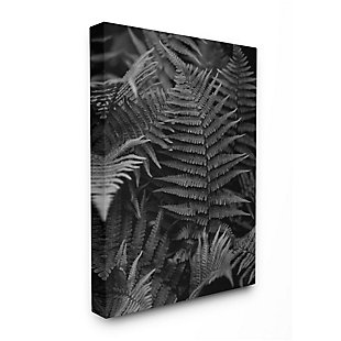 Stupell Industries  Ferns in the Forest Black and White Photograph, 36 x 48, Canvas Wall Art, Black, large