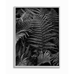 Stupell Industries  Ferns in the Forest Black and White Photograph, 16 x 20, Framed Wall Art, Black, large