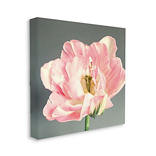 Stupell Industries  Pink Floral Close-Up Flower Petal Bloom , 36 x 36, Canvas Wall Art, Gray, large