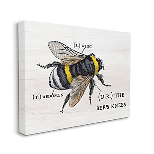 Stupell Industries  Anatomy of Honey Bee Pun Charming Bee's Knees, 36 x 48, Canvas Wall Art, Off White, large