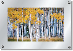 Heavy Effects  Aspen Tree Forest Landscape Wall Decor White Etched Frosted Frame, Yellow, large