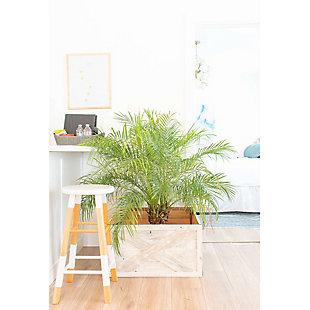 White Wash Tree and Plant Box Collar, , rollover