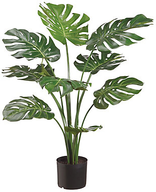 3' Split Philodendron Plant, , rollover