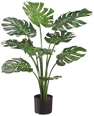 3' Split Philodendron Plant, , large