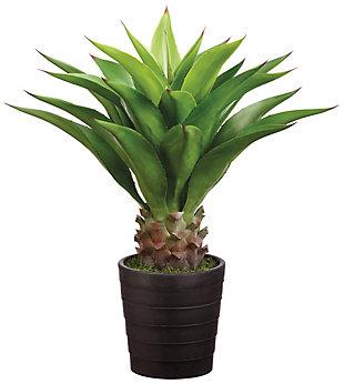 """32"""" Agave Attenuata Plant, , rollover"""