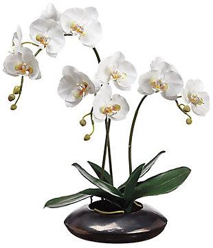 "22"" Phalaenopsis Orchid Arrangement, , large"