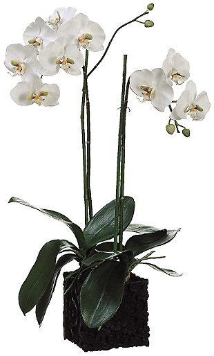 "31"" Phalaenopsis Orchid Arrangement, , rollover"