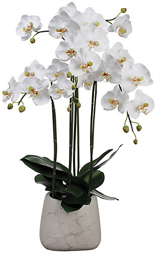 "35"" Phalaenopsis Orchid Arrangement, , rollover"