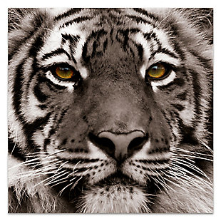 Empire Art Direct Eye of the Tiger Frameless Free Floating Tempered Glass Panel Graphic Wall Art, , large