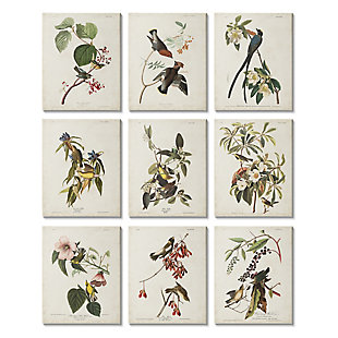 Stupell Various Warbler Birds Perched on Branches Vintage Study 11 x 14 Canvas Wall Art (Set of 9), , large