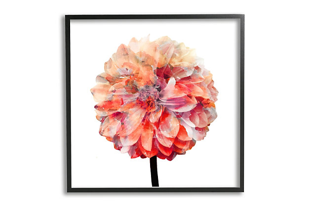 Stupell Bright Coral Watercolor Bloom Dahlia Flower 24 x 24 Framed Wall Art, Pink, large
