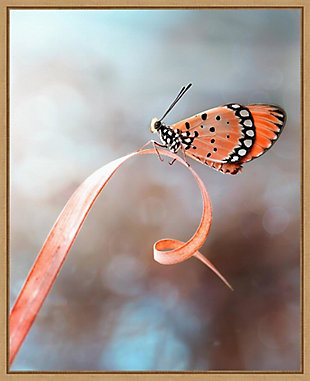 Amanti Art The Butterfly Framed Canvas Art, , large